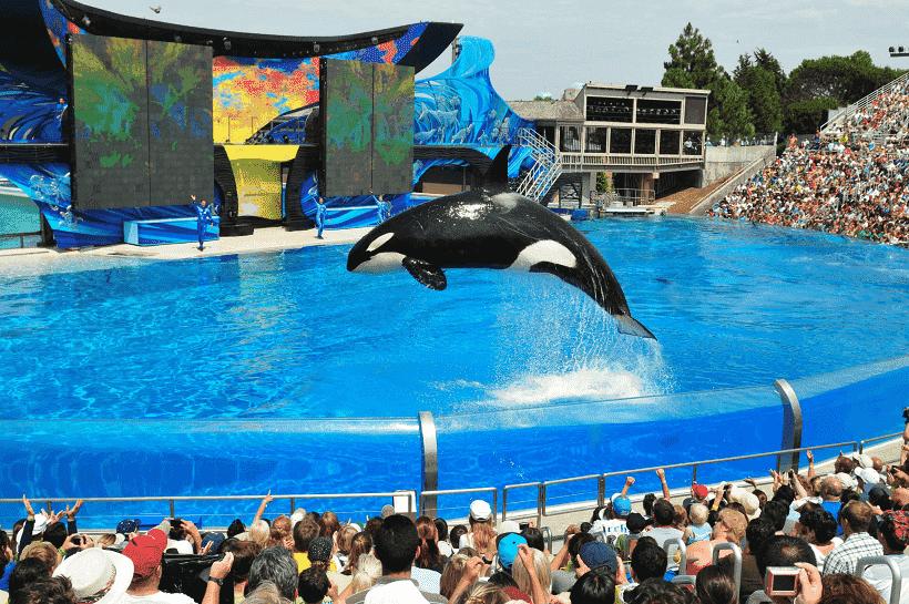 Parque Sea World