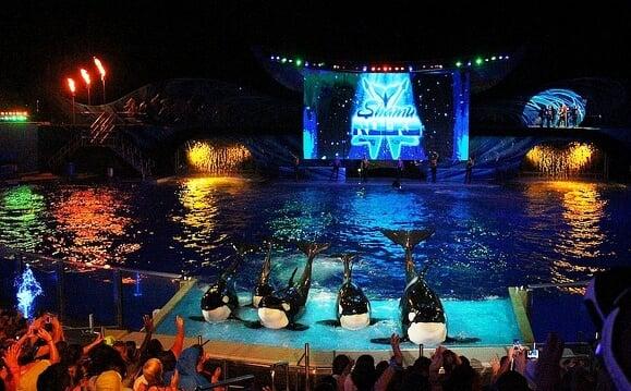 Atrações das Summer Nights no Sea World