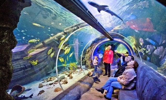 aquário Sea Life no I-Drive 360