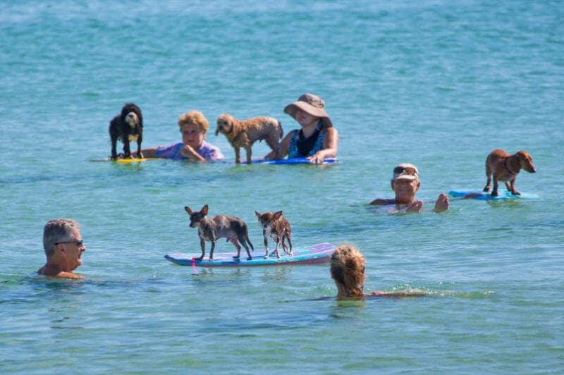Cães em praia de Miami
