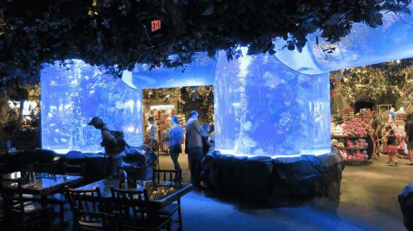 Restaurante Rainforest Cafe em Orlando