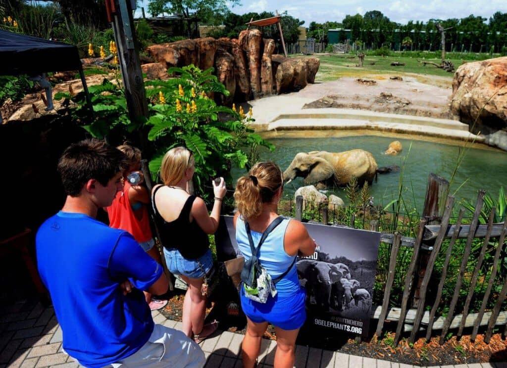 Elefantes no Lowry Park em Tampa