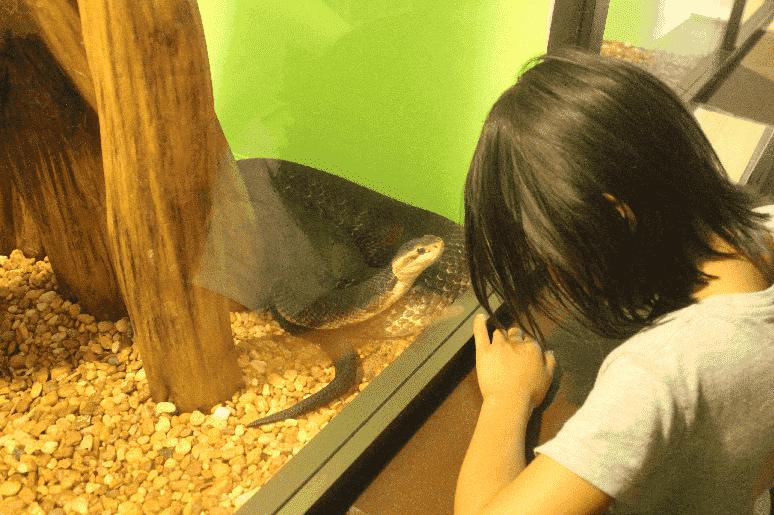 Reptile World Serpentarium em Orlando