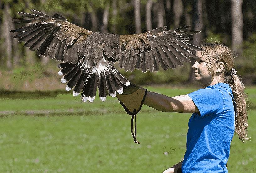 Center for Birds of Prey em Orlando