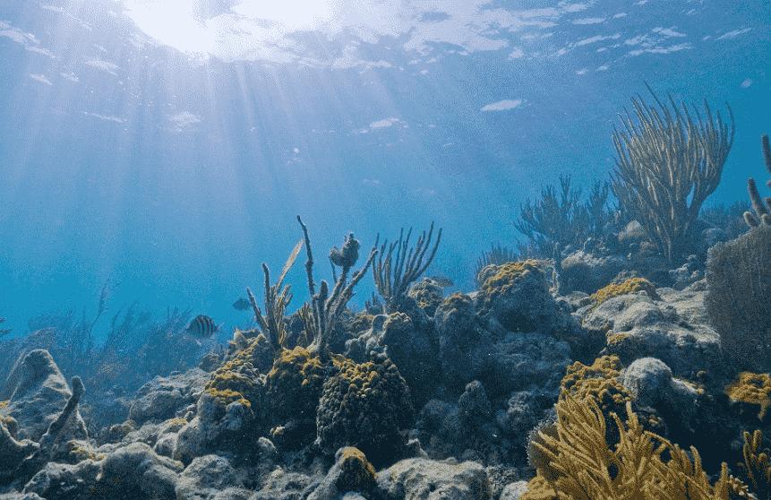 Biscayne National Underwater Park em Miami