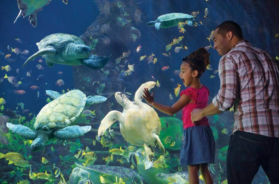 10 passeios pelos bastidores em Orlando: SeaWorld Adventure Camp em Orlando