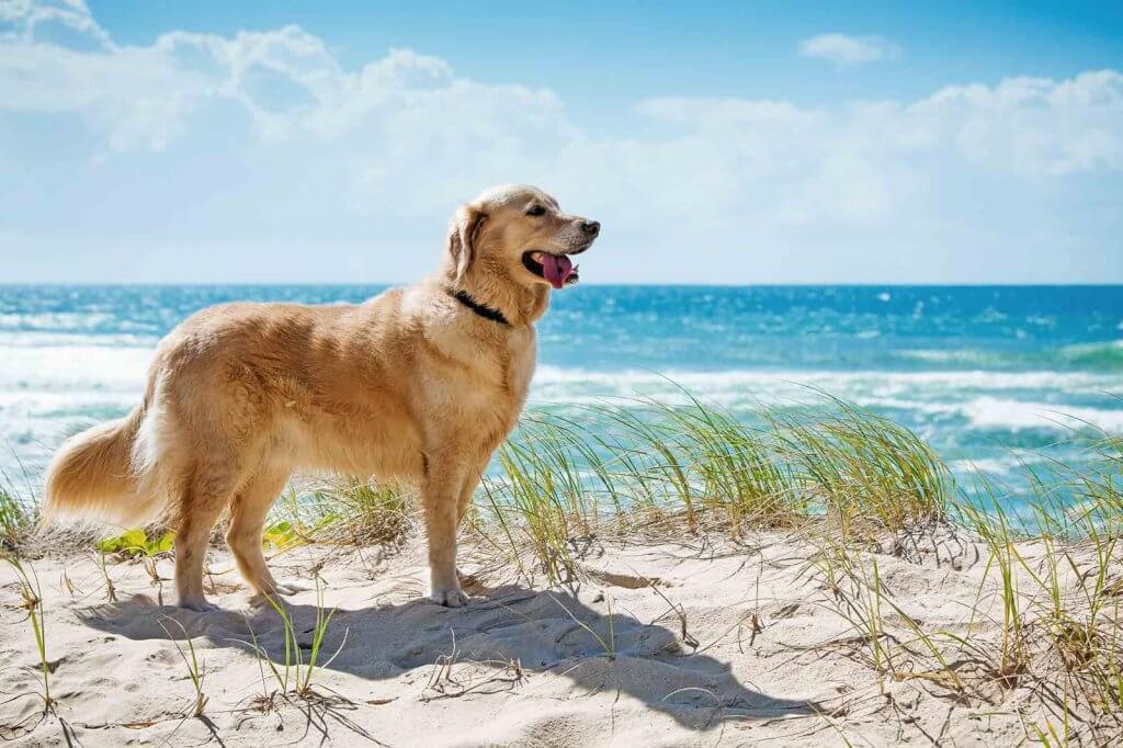 Como levar seu cachorro para Miami