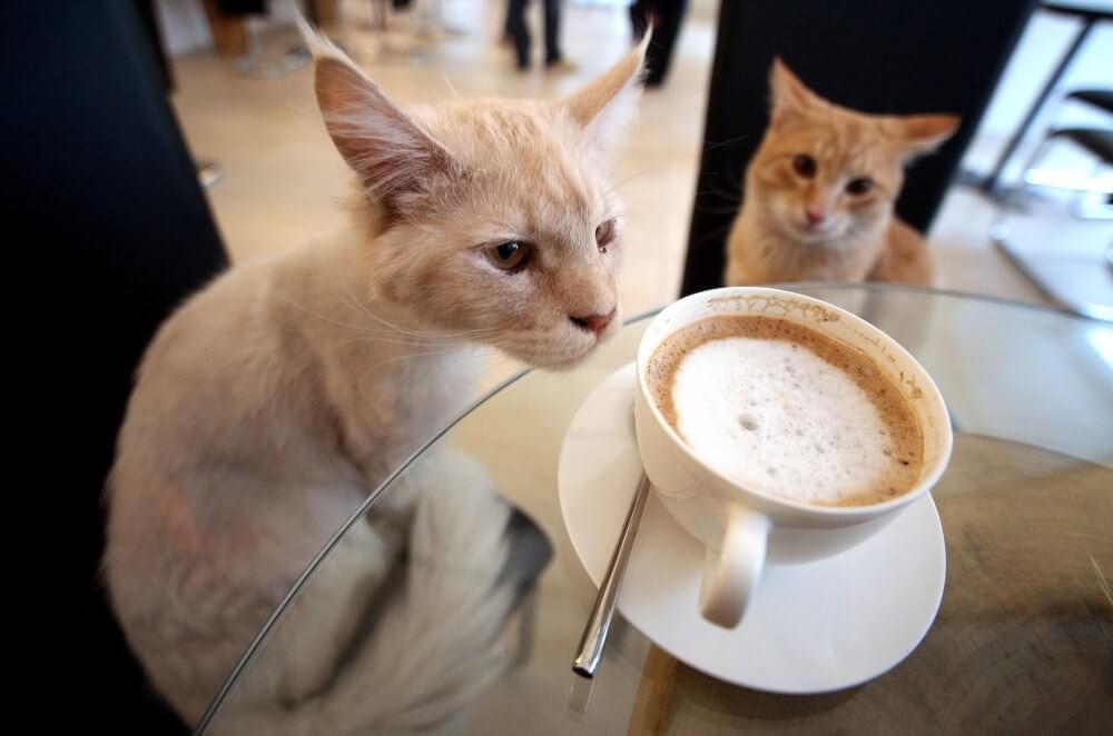 Prepare o gato para a viagem - hotéis que aceitam animais